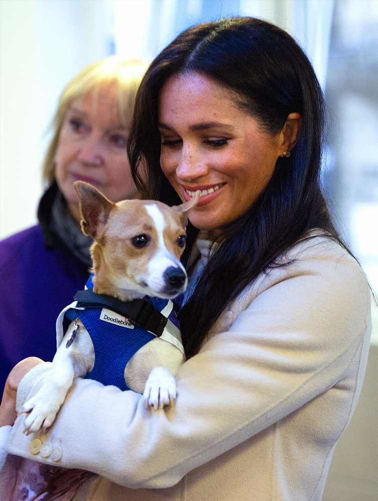 Meghan Markle Talks About the 'Joy' of Adopting an Animal in Foreword Written for Mayhew Patronage