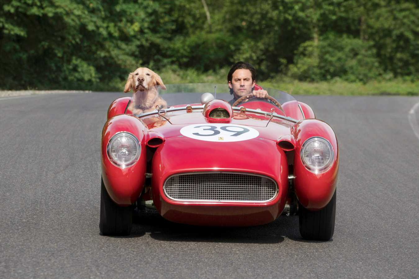Milo Ventimiglia wanted to bring Art of Racing in the Rain dog home