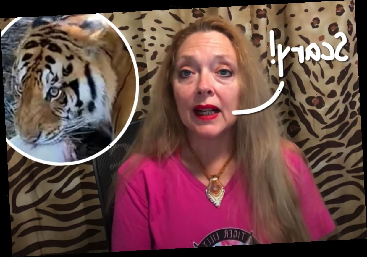Carole Baskin Speaks Out After Animal Rescue Volunteer Gets Bitten By Tiger & Suffers Serious Injuries!