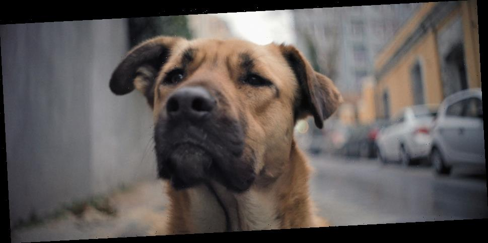 'Stray' Trailer: This Documentary Follows Some Very Good Dogs in Turkey