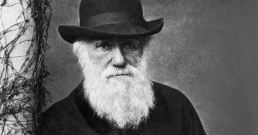 Darwin's Dim View of the Second Sex
