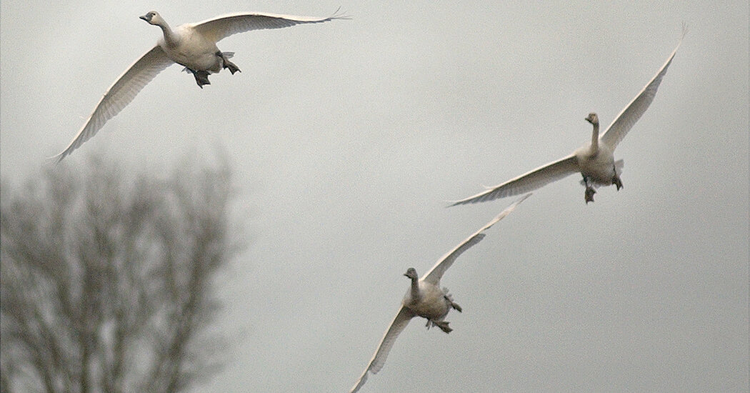 Why Are Migratory Birds Vanishing Out of the Sky?