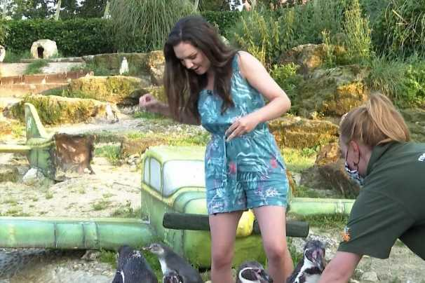 GMB weathergirl Laura Tobin screams in pain as she's BITTEN live on air by a penguin and yells 'I'm not a fish'