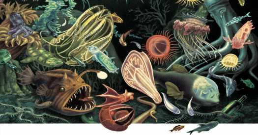 The Wonders That Live at the Very Bottom of the Sea